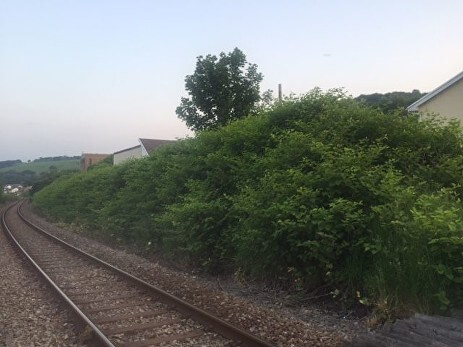 Rails and bushes on the side